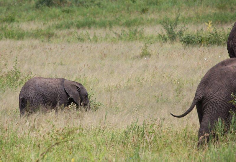 large_Elephants_5-17.jpg
