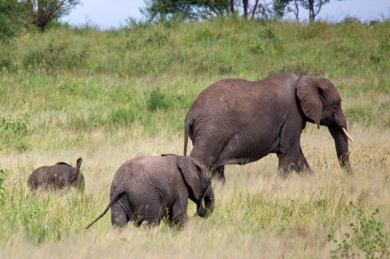 large_Elephants_5-18.jpg