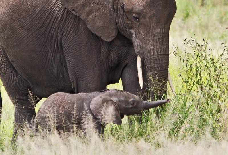 large_Elephants_5-2.jpg