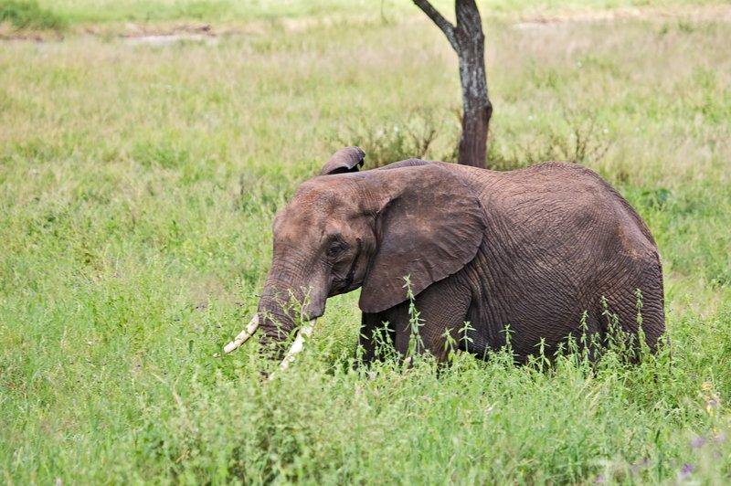large_Elephants_5-20.jpg
