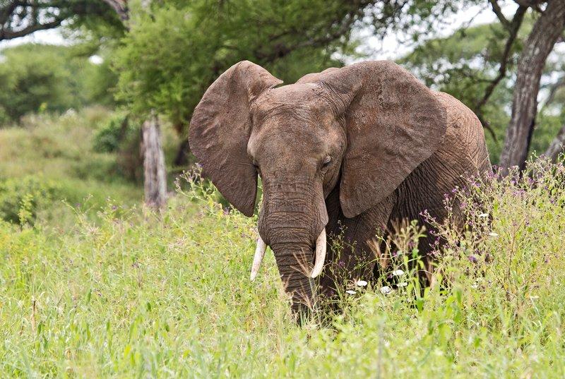 large_Elephants_5-24.jpg