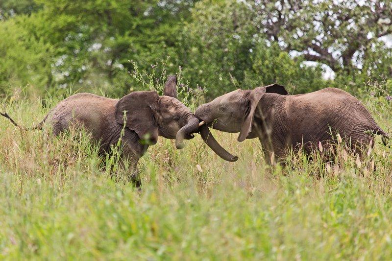 large_Elephants_5-29.jpg