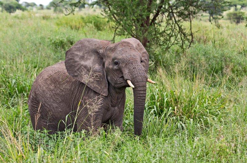 large_Elephants_5-33.jpg