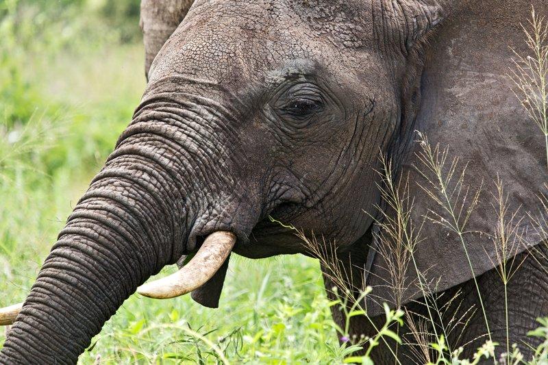 large_Elephants_5-36.jpg