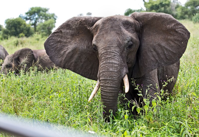 large_Elephants_5-38.jpg