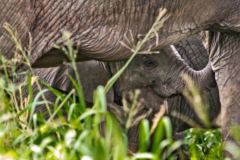 large_Elephants_5-39.jpg
