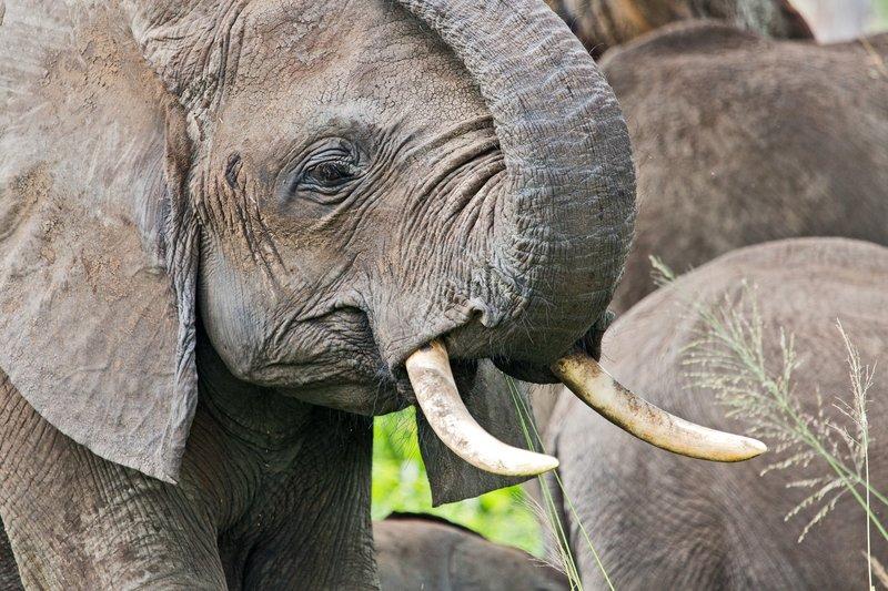 large_Elephants_5-43.jpg