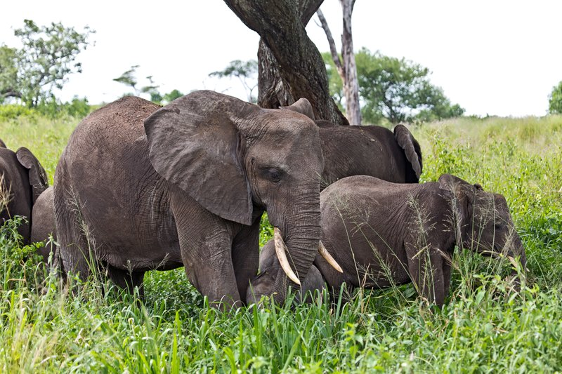 large_Elephants_5-44.jpg