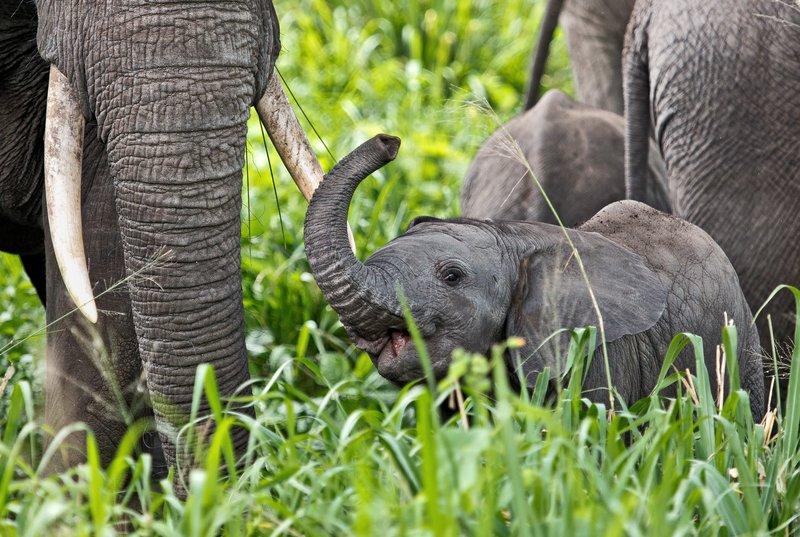 large_Elephants_5-45.jpg