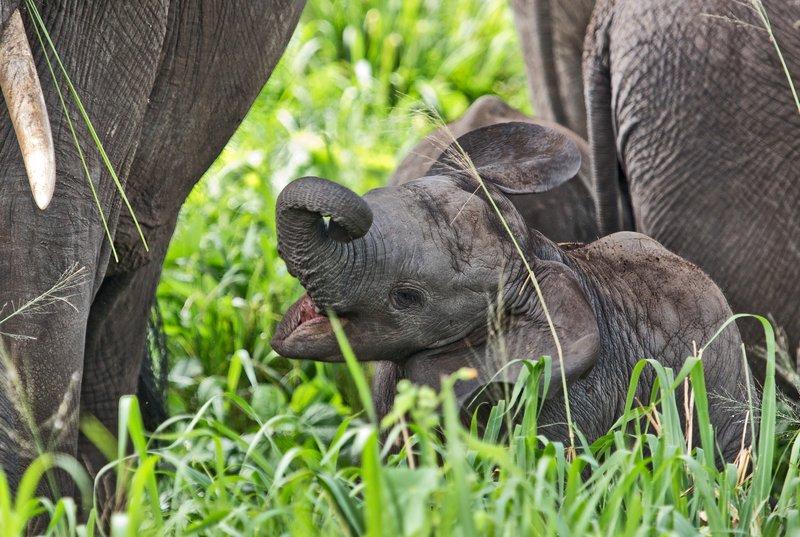 large_Elephants_5-46.jpg