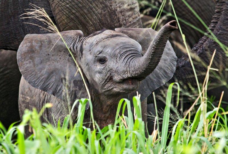 large_Elephants_5-47.jpg