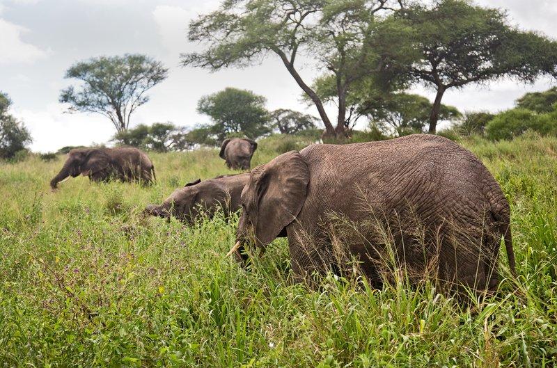 large_Elephants_5-51.jpg
