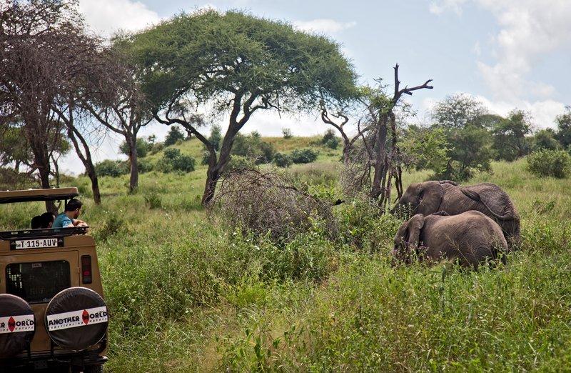 large_Elephants_5-52.jpg