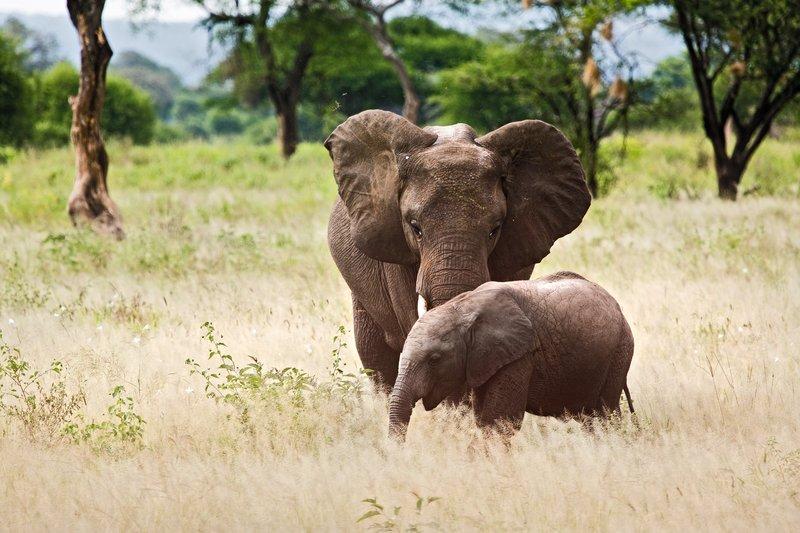 large_Elephants_5-7.jpg