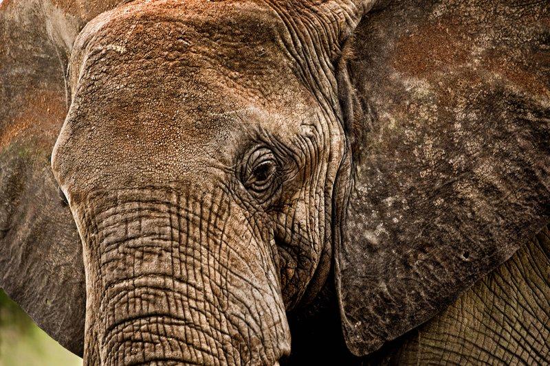 large_Elephants_51.jpg