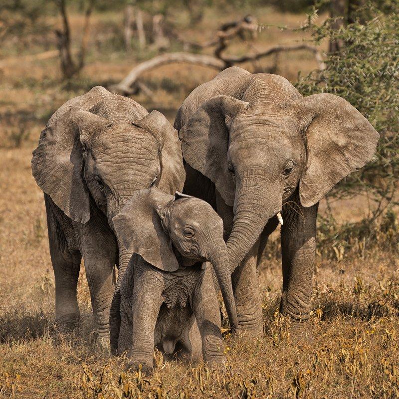 large_Elephants_55.jpg