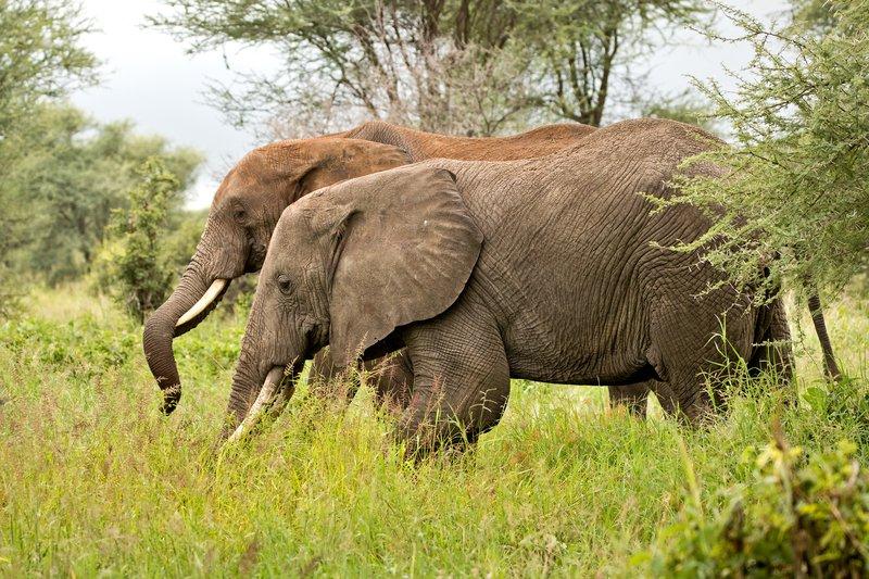 large_Elephants_57.jpg