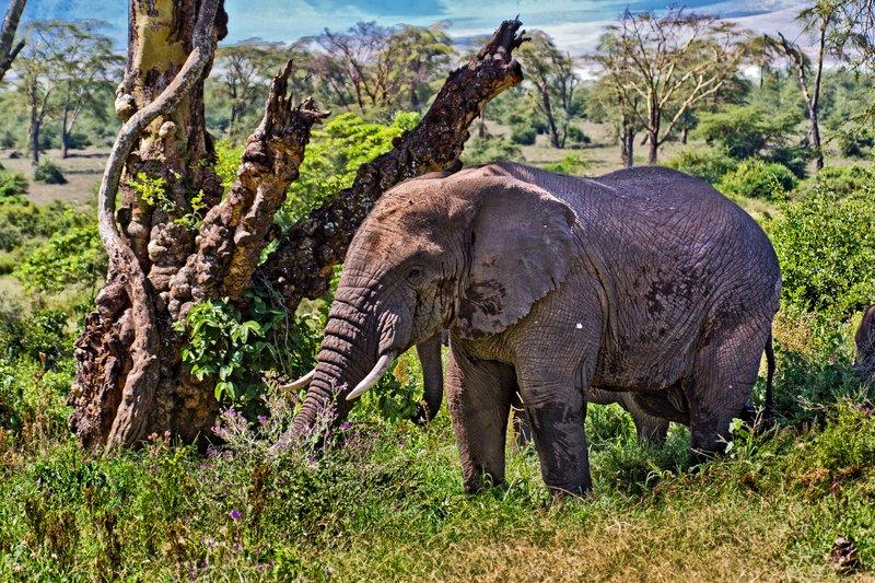 large_Elephants_6-12.jpg
