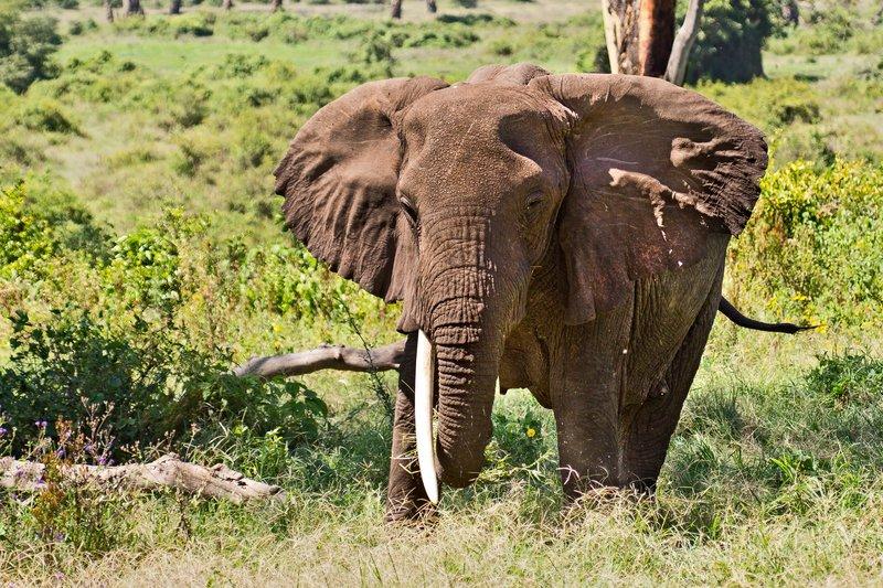 large_Elephants_6-19.jpg
