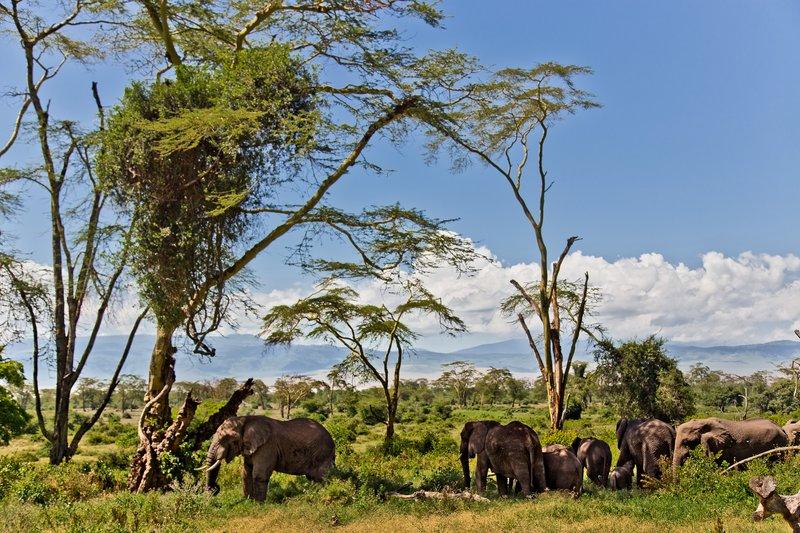 large_Elephants_6-31.jpg
