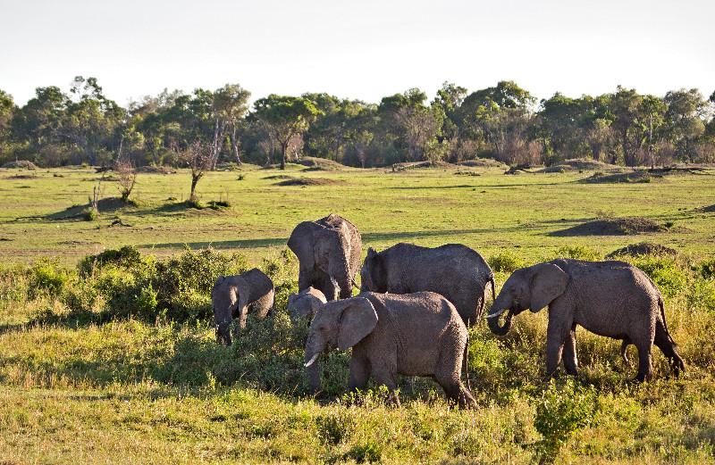 large_Elephants_61.jpg