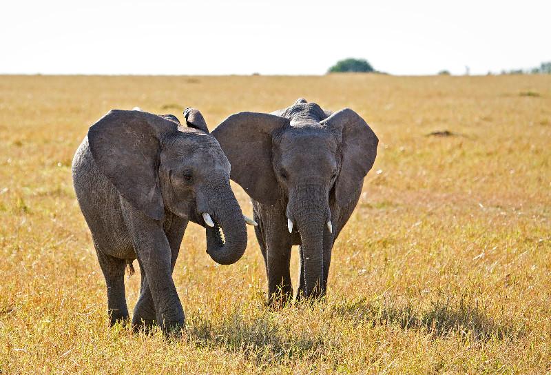 large_Elephants_62.jpg