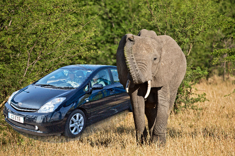large_Elephants_64_A.jpg
