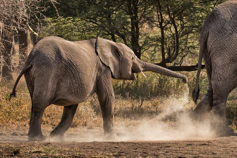 large_Elephants_67.jpg