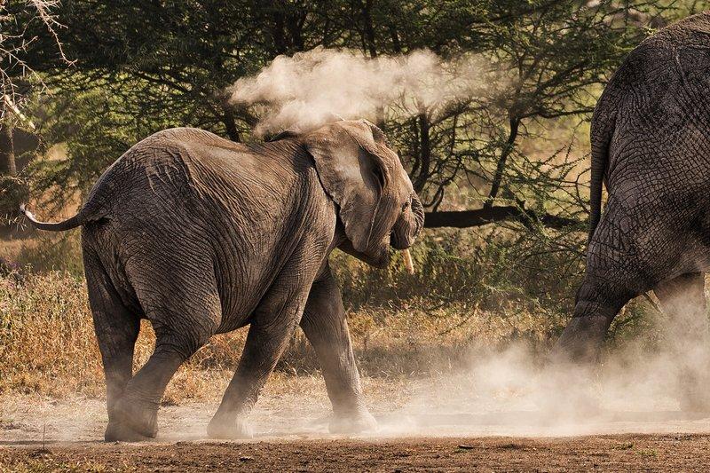 large_Elephants_69.jpg