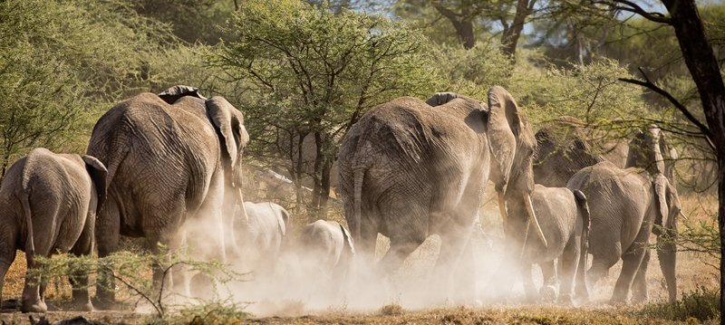 large_Elephants_70.jpg