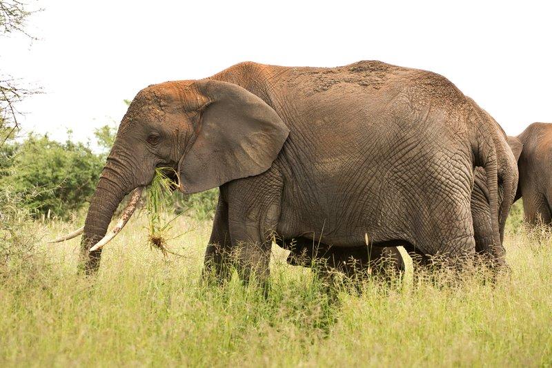 large_Elephants_704.jpg