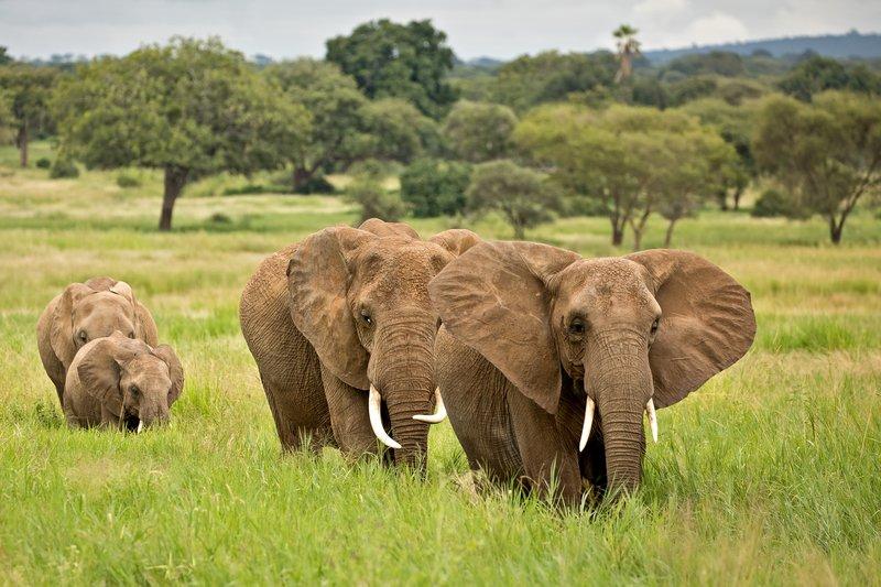 large_Elephants_705.jpg