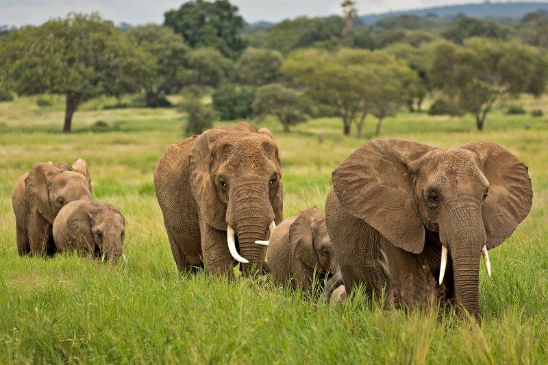 large_Elephants_706.jpg