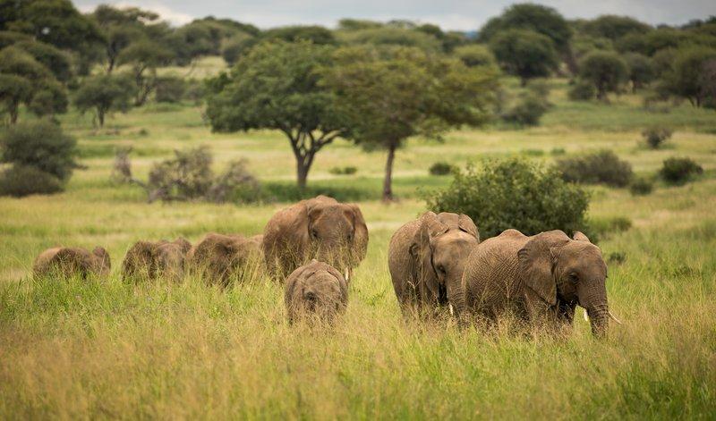 large_Elephants_707.jpg