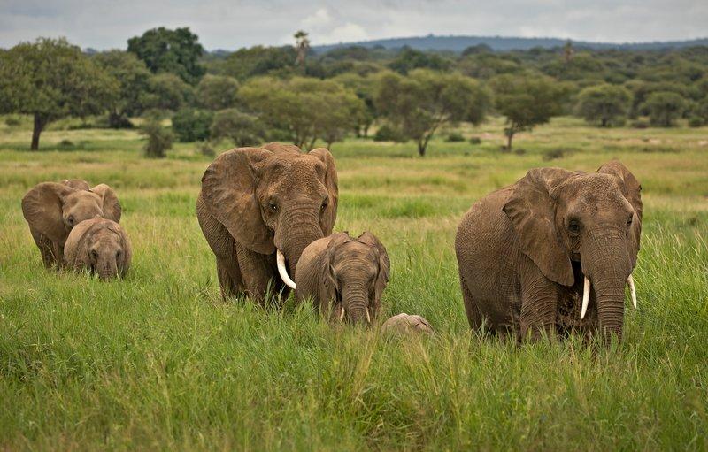large_Elephants_708.jpg