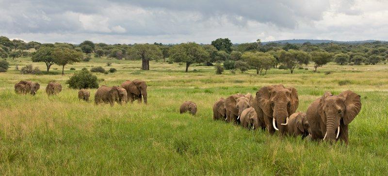 large_Elephants_709.jpg