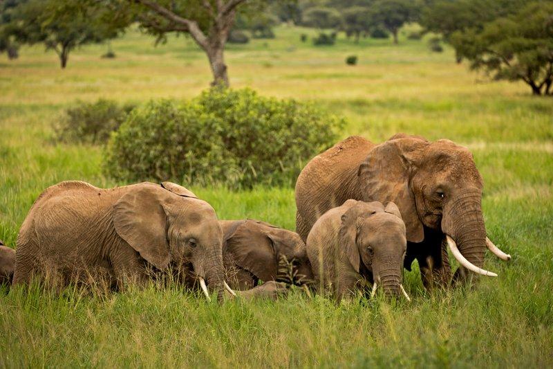 large_Elephants_710.jpg