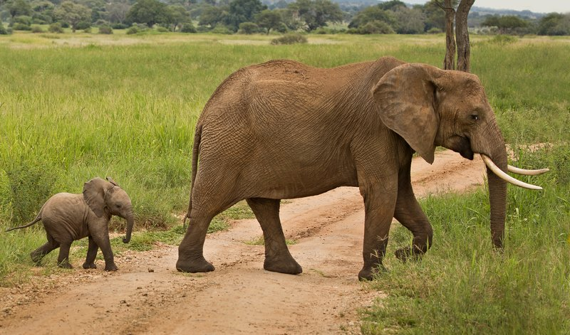 large_Elephants_713.jpg