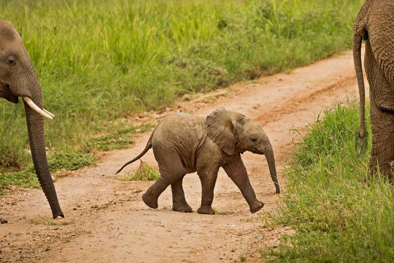 large_Elephants_715.jpg