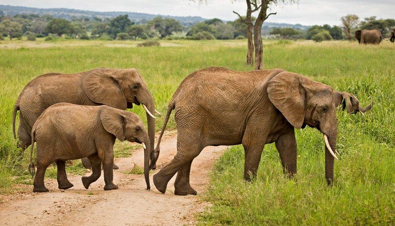 large_Elephants_719.jpg