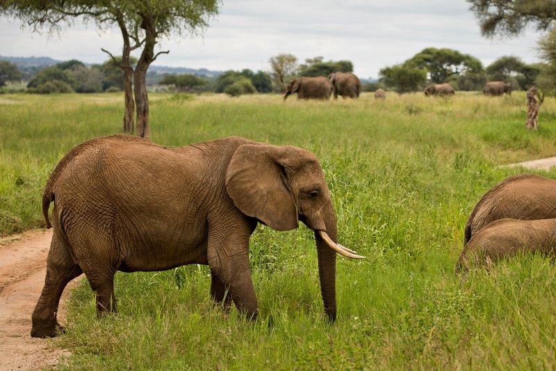 large_Elephants_724.jpg