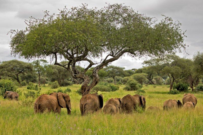 large_Elephants_725.jpg