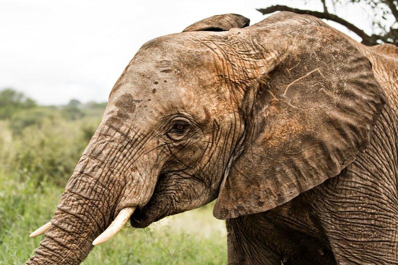 large_Elephants_730.jpg
