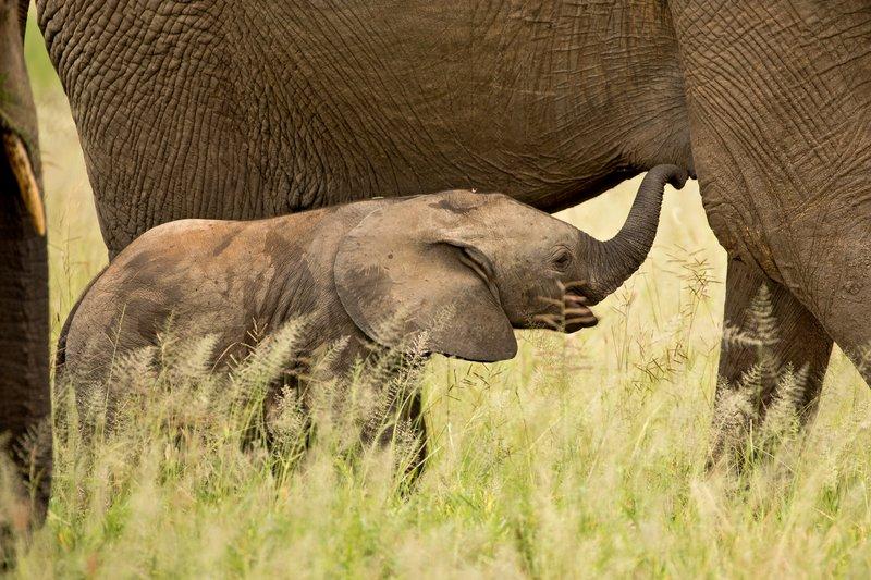 large_Elephants_733.jpg