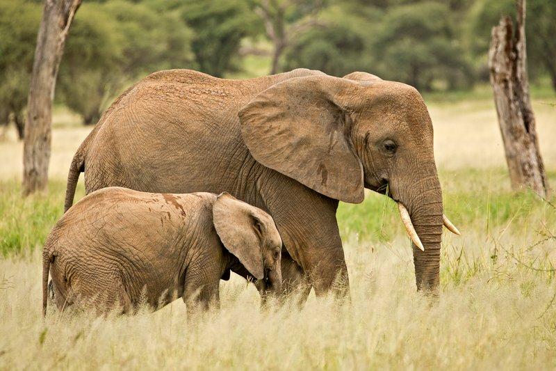 large_Elephants_734.jpg