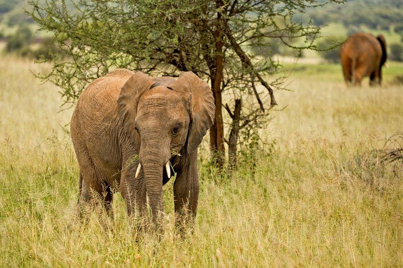 large_Elephants_735.jpg