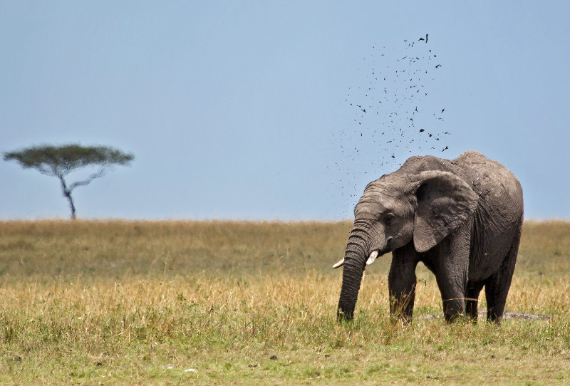 large_Elephants_75.jpg