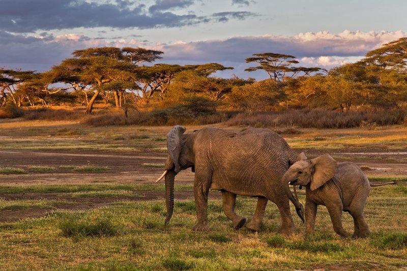 large_Elephants_8-2.jpg