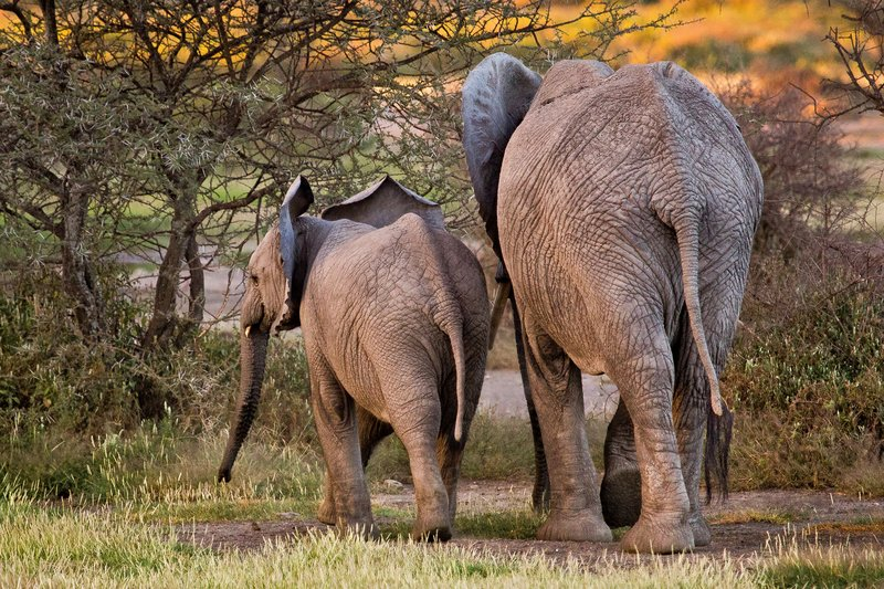 large_Elephants_8-22.jpg