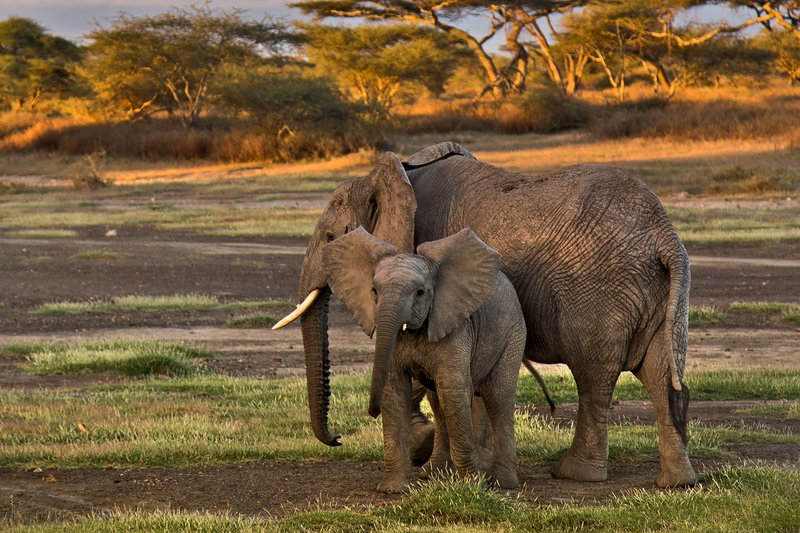 large_Elephants_8-4.jpg